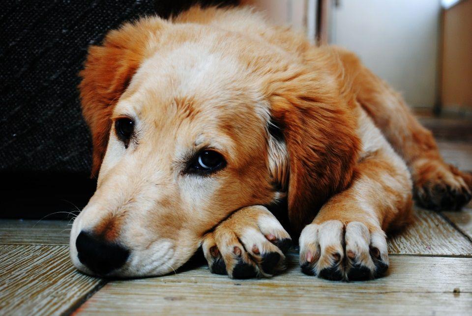 malattie morte cane