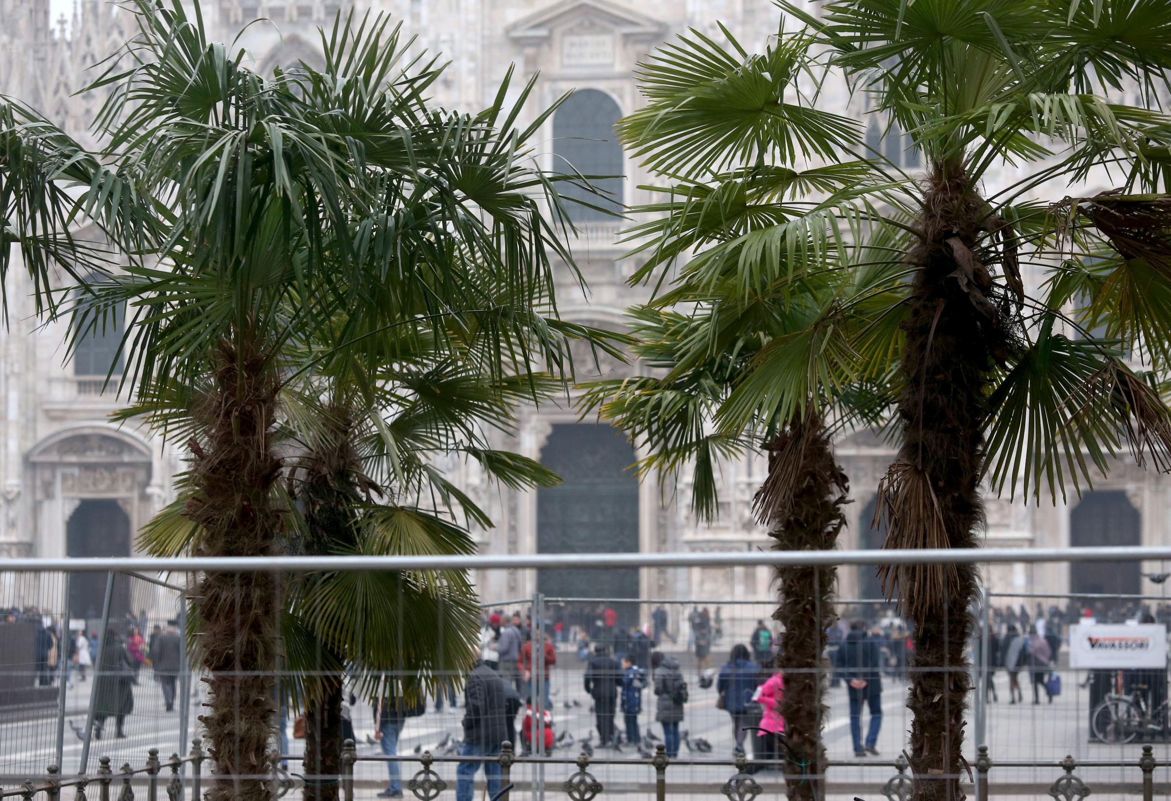 Palme in Piazza Duomo a Milano, polemiche: islamizzazione della città?