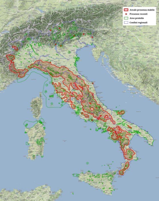 popolazione lupo in italia 2014