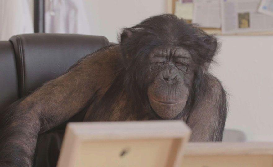 Una scimmia all'Isola dei Famosi 2017: è la dottoressa Tibi