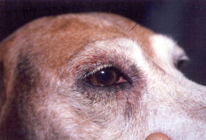 veleni cani sintomi