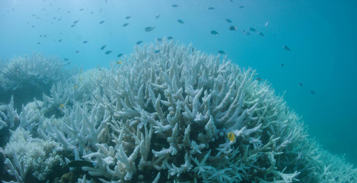 Sbiancamento della Grande barriera corallina australiana