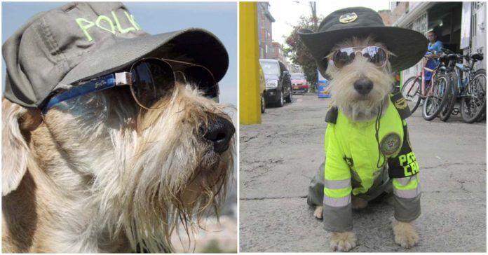La polizia colombiana arruola Azul, «il cane in divisa più figo del mondo»