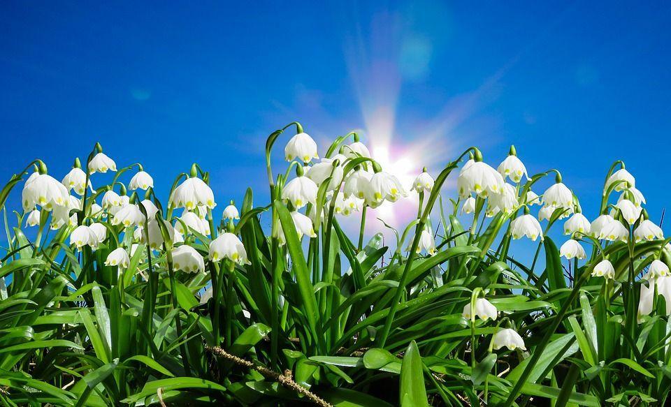 Equinozio di primavera, che cos'è e perché si chiama così
