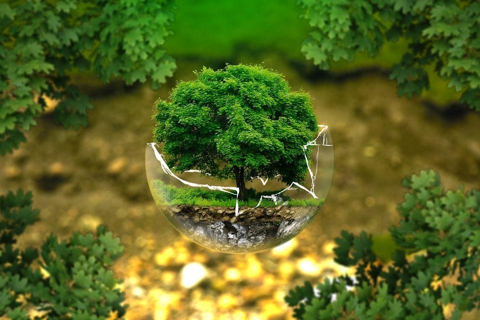 giornata mondiale natura
