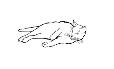 linguaggio del gatto rilassato