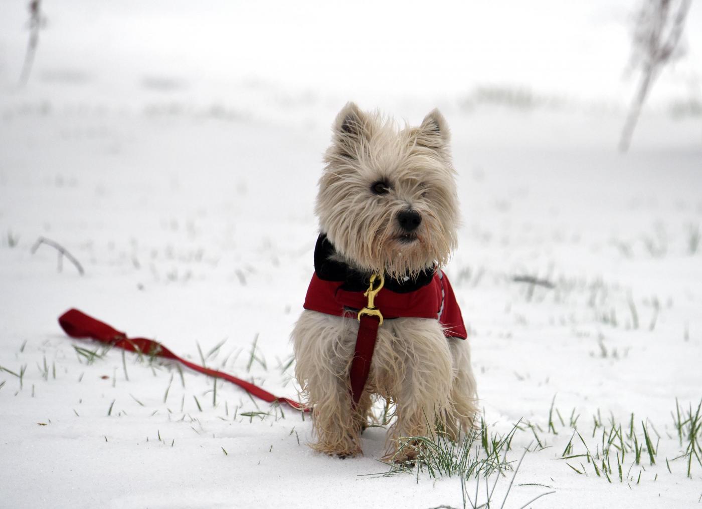 Perché si dice 'freddo cane'? Il significato di un bizzarro modo di dire