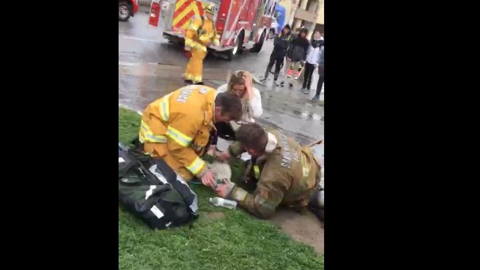 pompiere salva cane