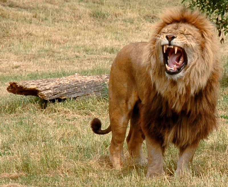 Gli animali più pericolosi del mondo: i 10 killer del regno animale
