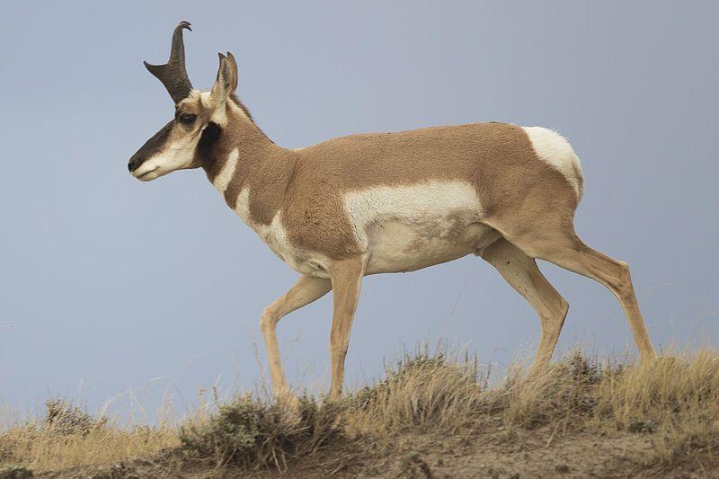 Gli animali più veloci la classifica dei corridori della natura