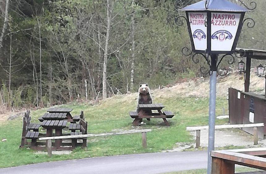 Il mistero dell'orso seduto al bar delle Cascate Nardis a Pinzolo