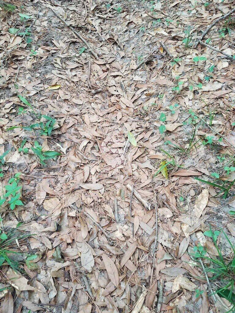 serpente mimetizzato tra le foglie illusione ottica