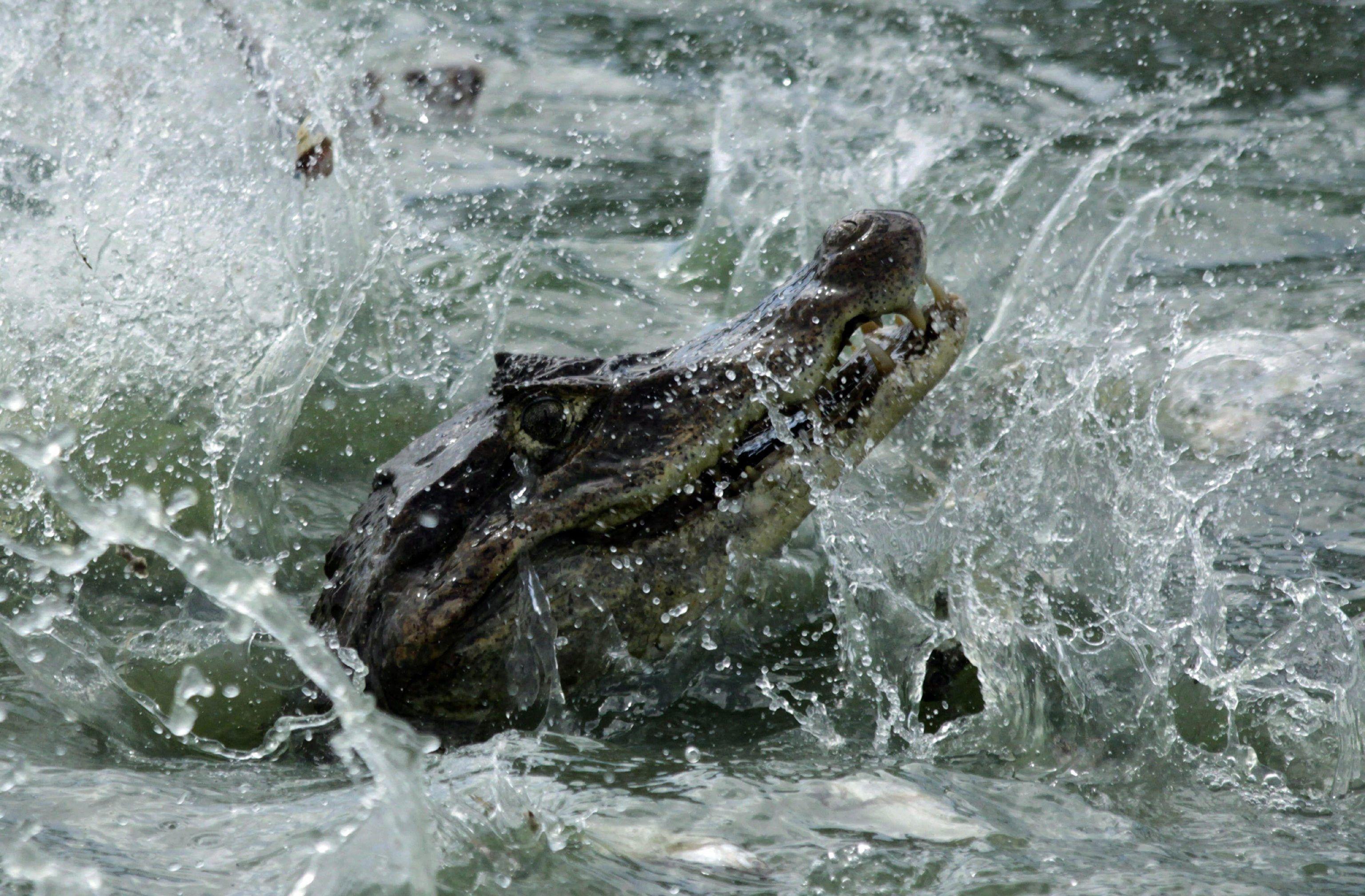 Vuole camminare sulle acque come Gesù, sacerdote mangiato dai coccodrilli