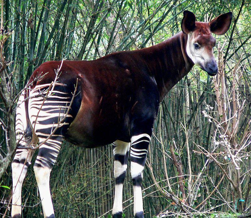 Gli animali più strani del mondo: le creature più incredibili presenti in Natura