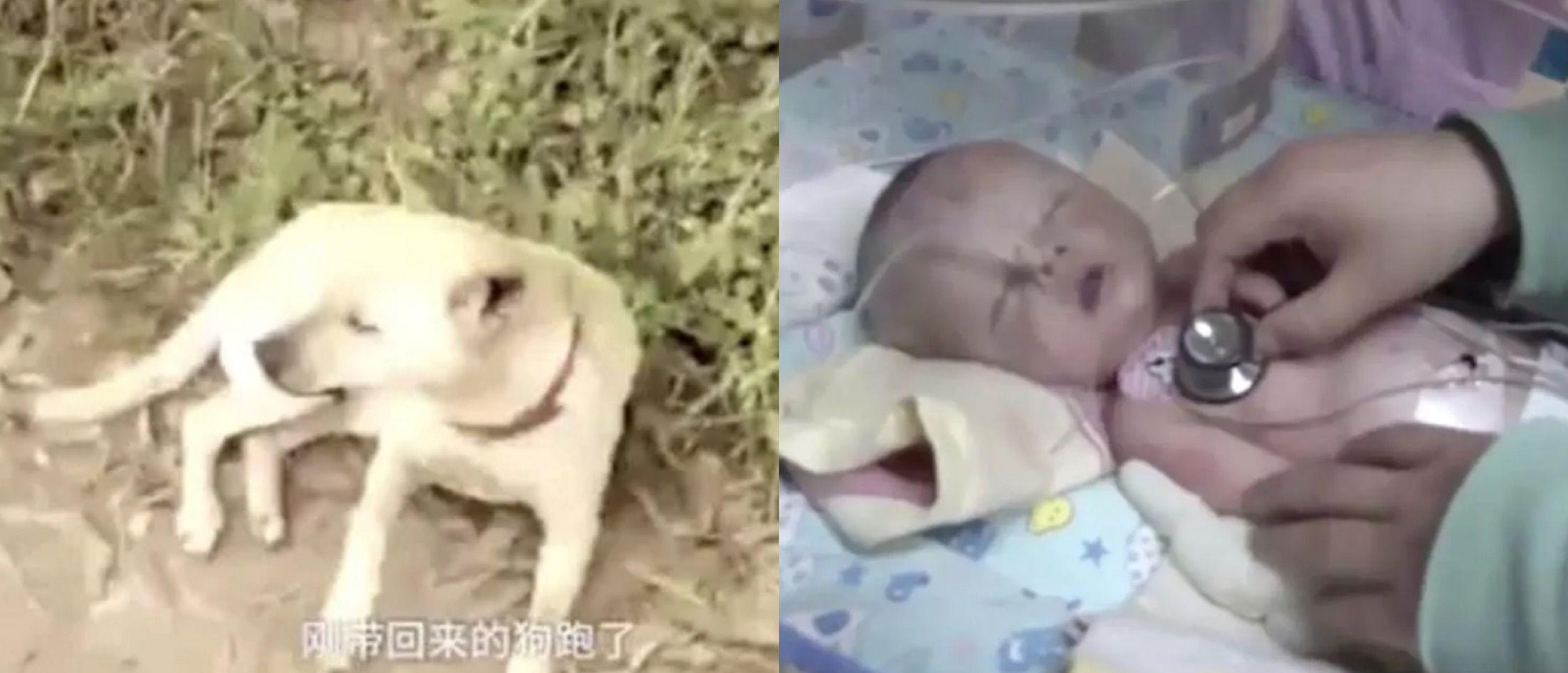 Cane salva un neonato sepolto vivo grazie al suo fiuto: l'incredibile salvataggio in Cina
