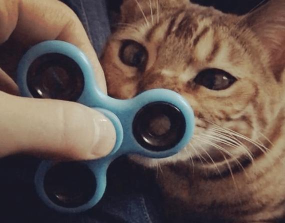 gatto fidget spinner