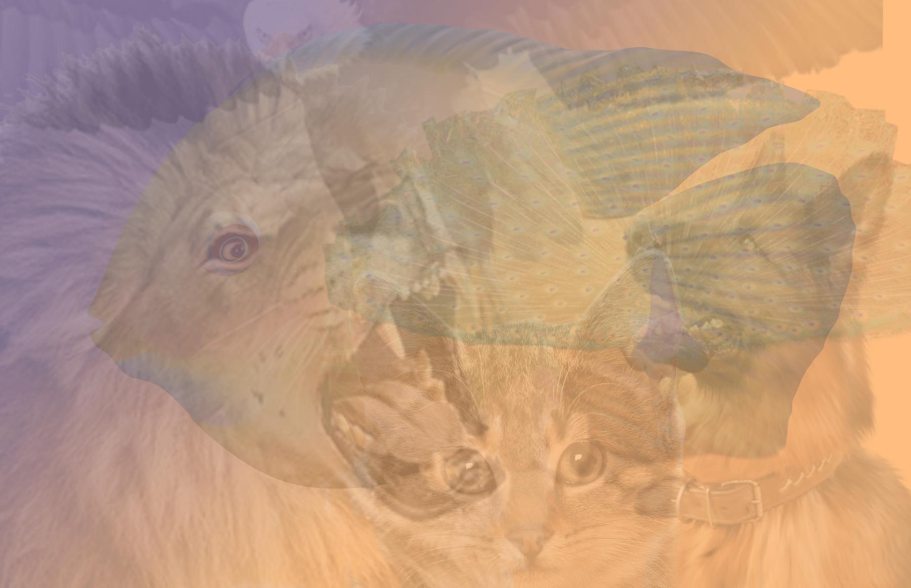quale animali vedi test personalita