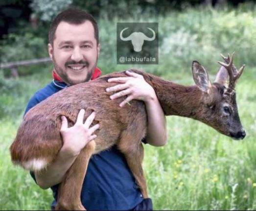 Salvini con il cerbiatto