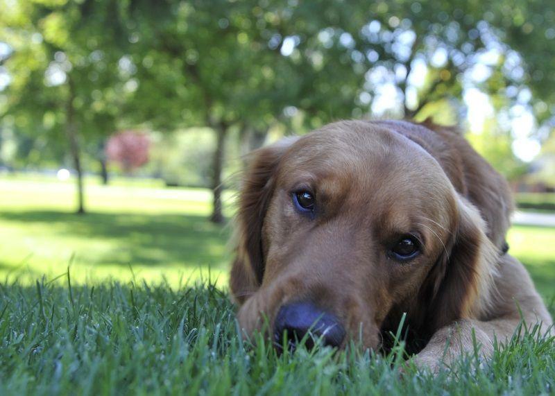 Cosa fare se il cane vomita