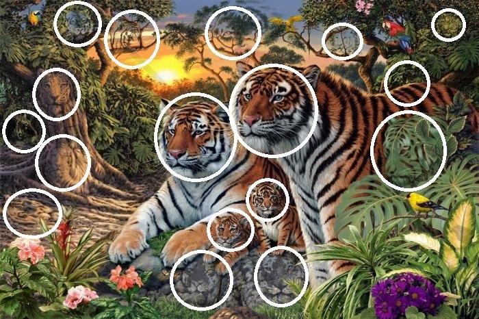 quante tigri soluzione