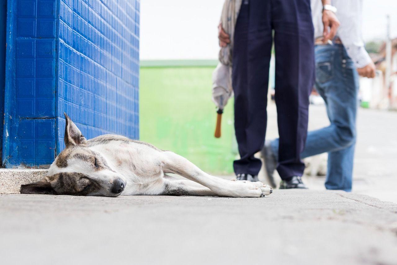 Bocconi avvelenati per cani, allarme a Genova: 16 nuove vittime