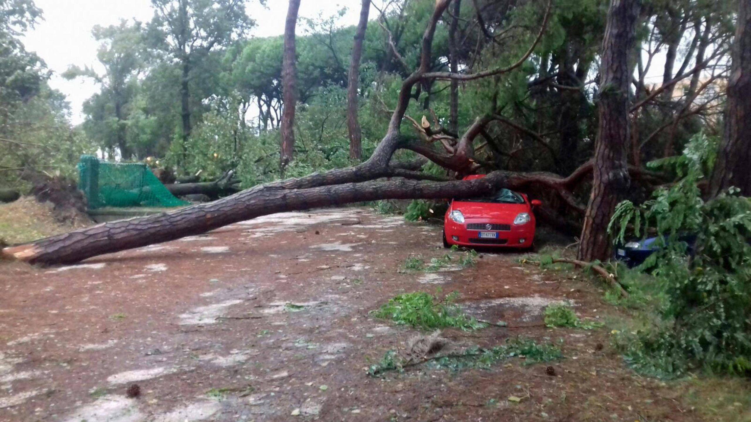 Maltempo: alberi caduti e finestre rotte in Ulss 4 Veneto