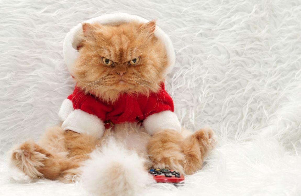 I 5 gatti più famosi del web: da Grumpy a Garfi
