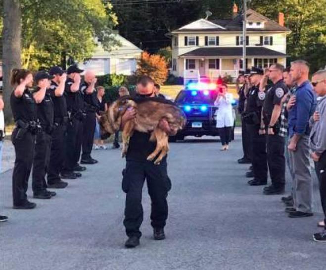 Addio al cane poliziotto con il picchetto d'onore
