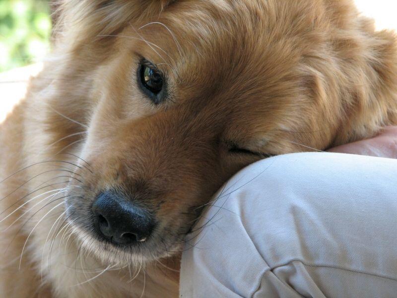 Amore dei cani, la scienza spiega come e perché ci vogliono bene