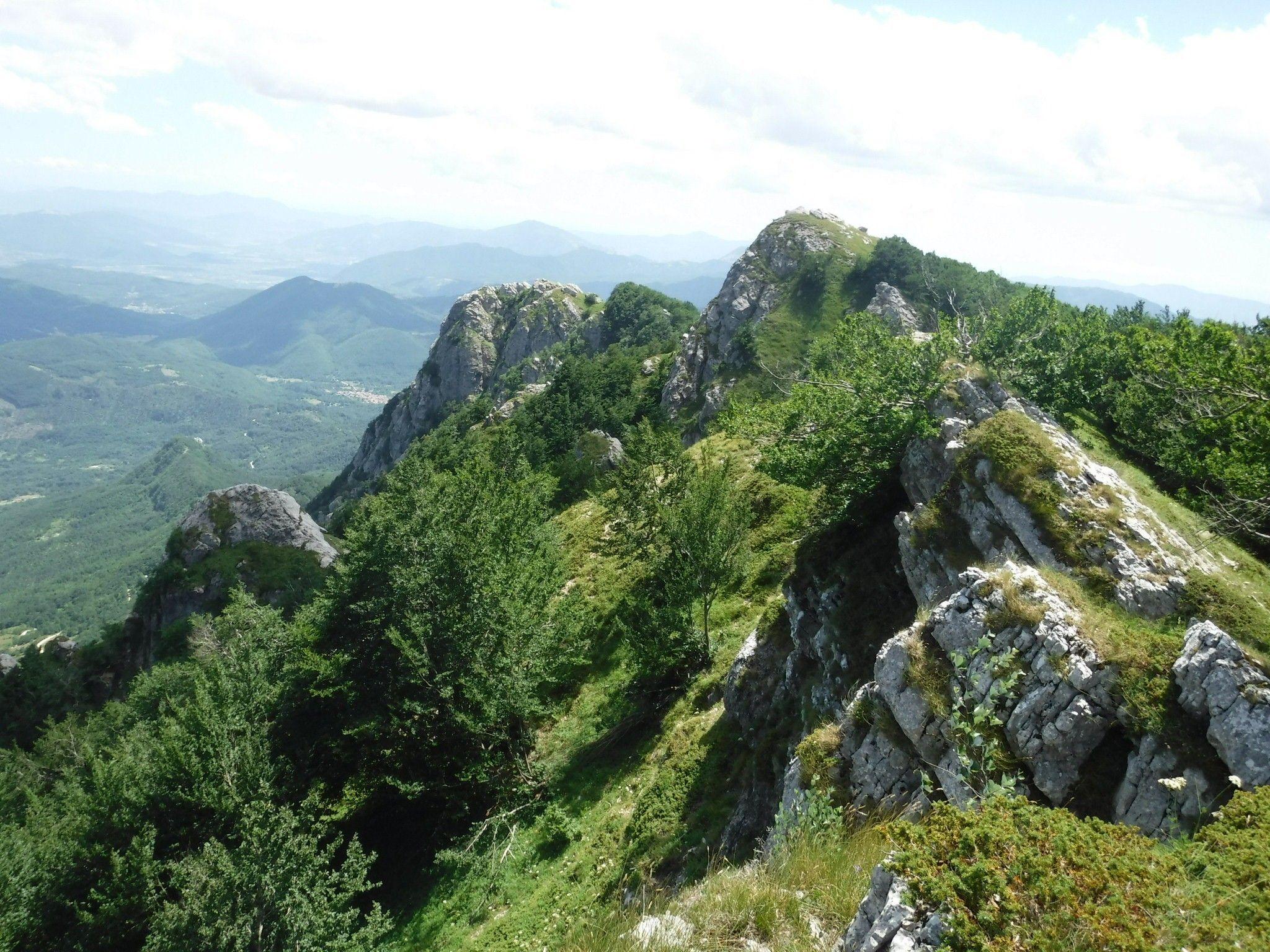 Bosco di faggi in montagna nel Parco d'Abruzzo