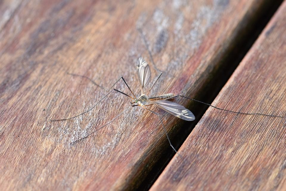 Piante che allontanano le zanzare, quali sono?