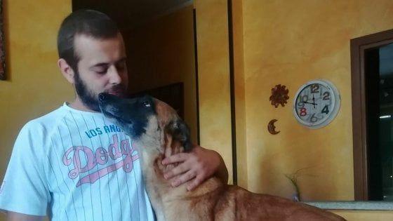 Torino, ucciso dal cane che doveva addestrare