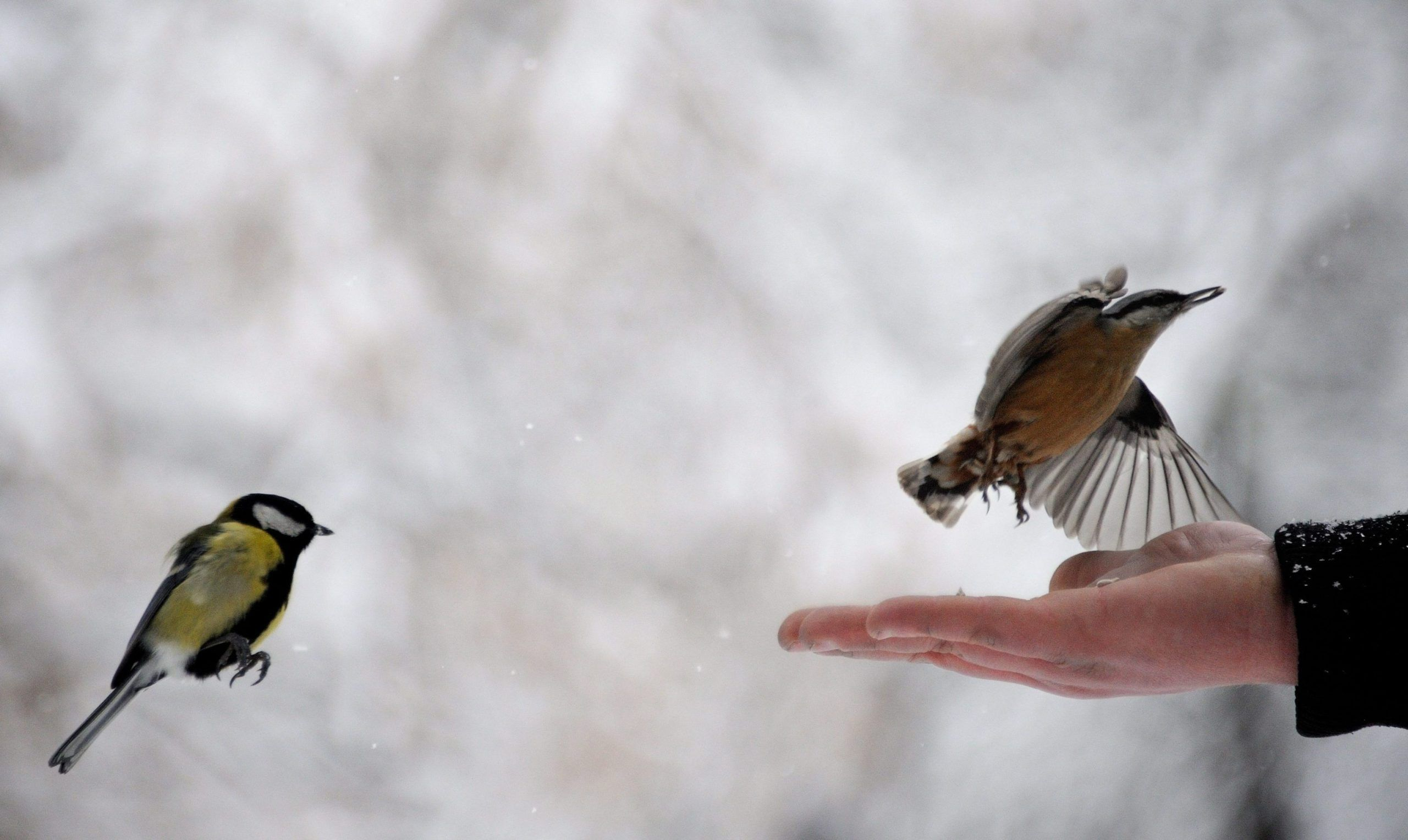 MALTEMPO: ANIMALI ALLE PRESE CON IL FREDDO / SPECIALE