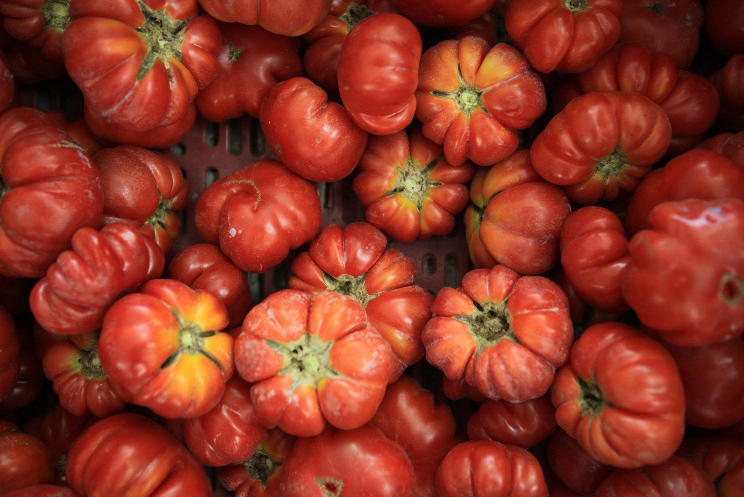 L'azienda bio era falsa: a Ragusa sequestrate 10 tonnellate di pesticidi