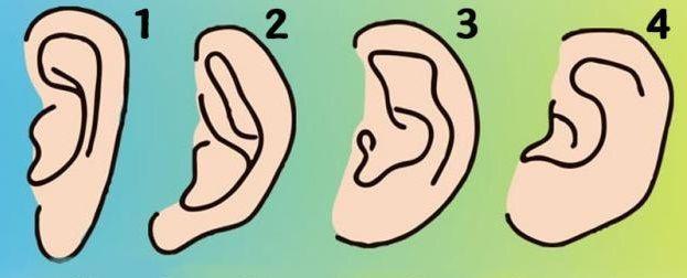 forma delle orecchie