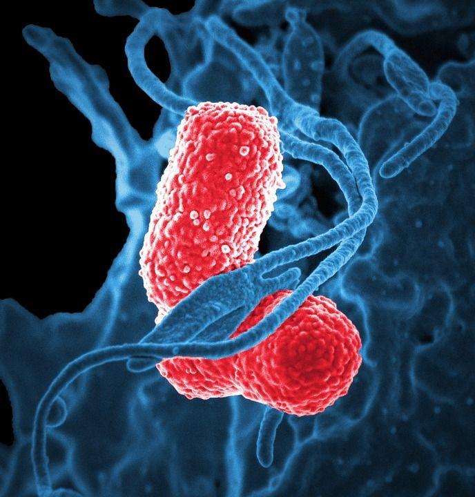 Quando gli antibiotici diventano resistenti: lotta al batterio killer Kpc