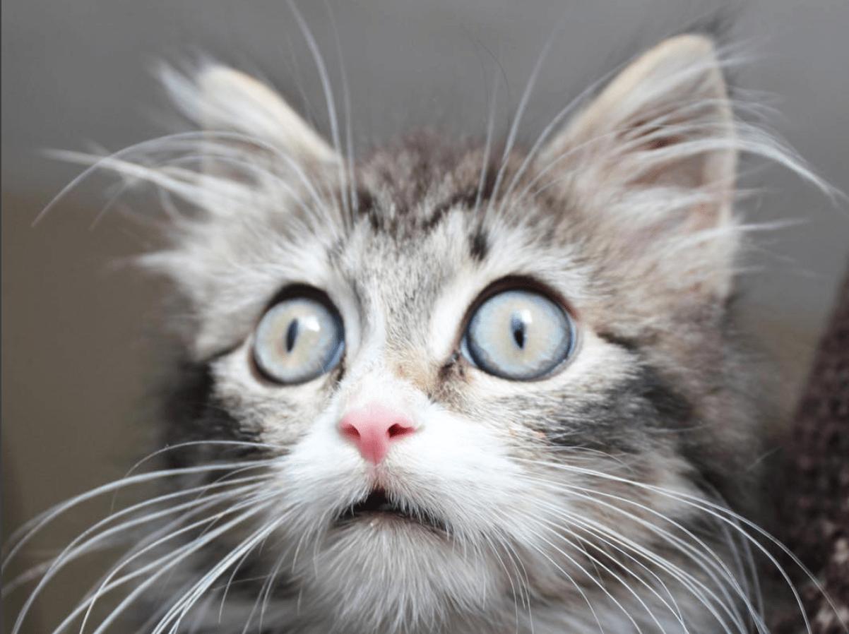 Donna salva un gattino trovatello: 'È lui che ha salvato me'