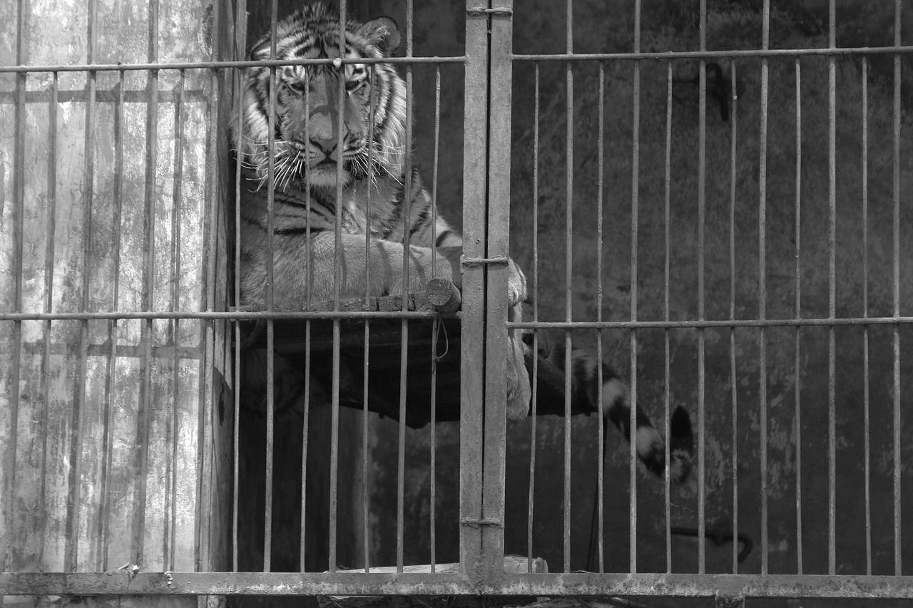 Zoo degli orrori