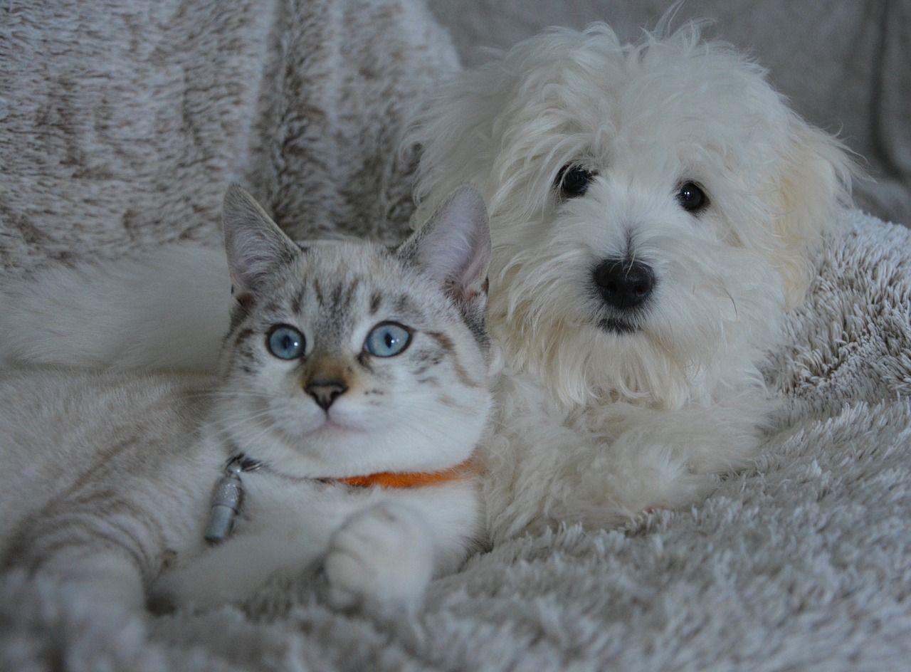 Affidamento del cane di famiglia in caso di separazione: a chi va e se esiste l'assegno di mantenimento