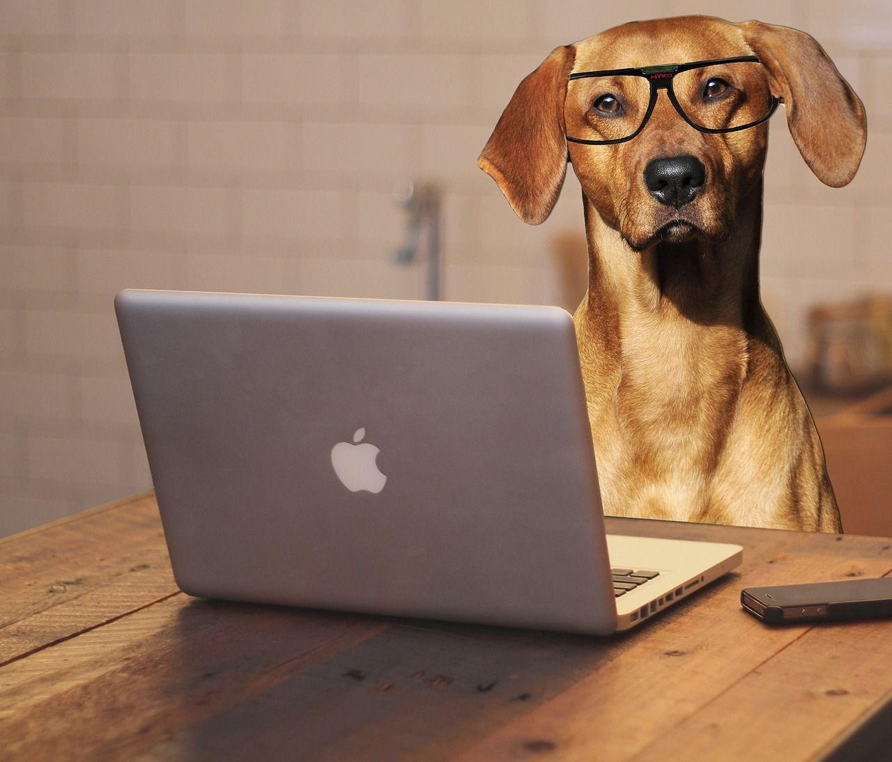 Cani in ufficio, a Genova i dipendenti comunali potranno portarsi animali domestici al lavoro