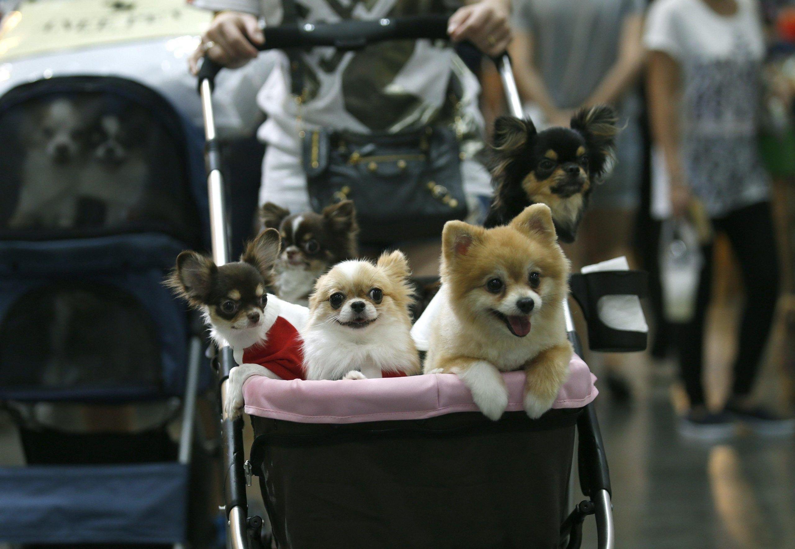 Arriva il congedo retribuito per chi adotta un animale domestico