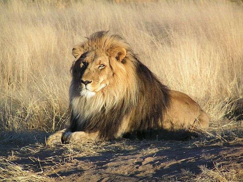 Animali della savana, i nomi e le specie particolari