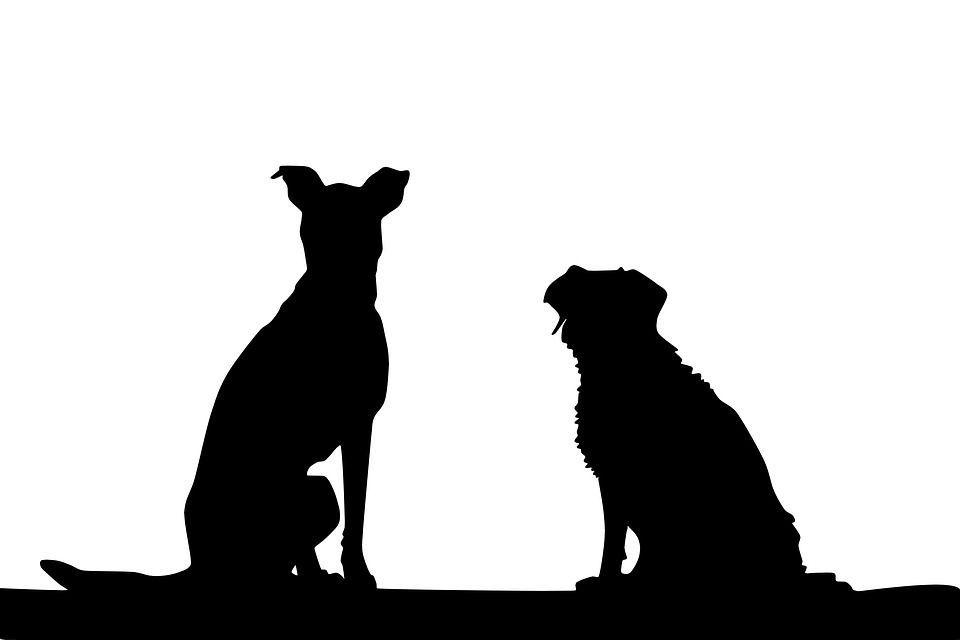 Illusione ottica divertente: riesci a vedere il cane 'mimetico'?