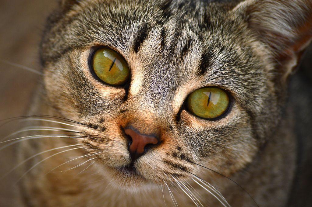 Malattie dei gatti: ecco sintomi, cure e prevenzione delle principali