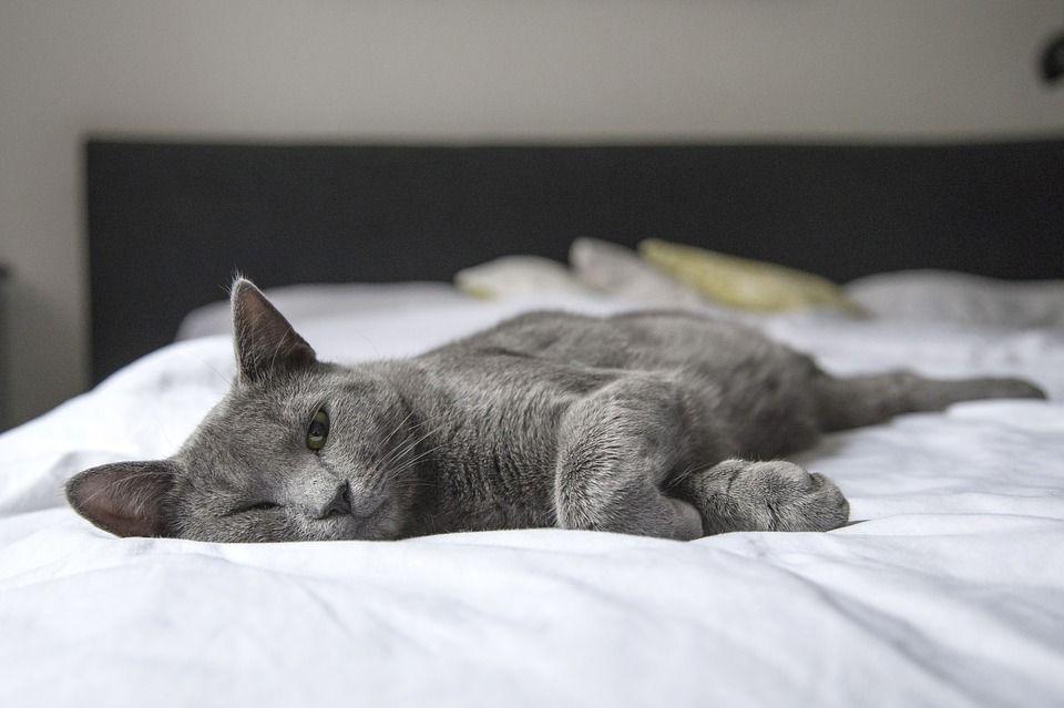 Come non far salire il gatto sul letto