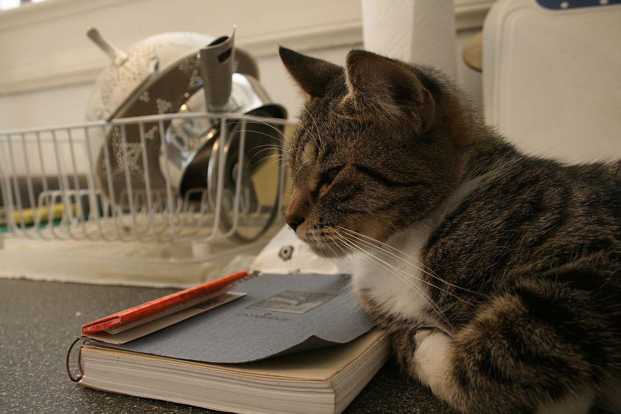 come non far saltare il gatto sulla cucina