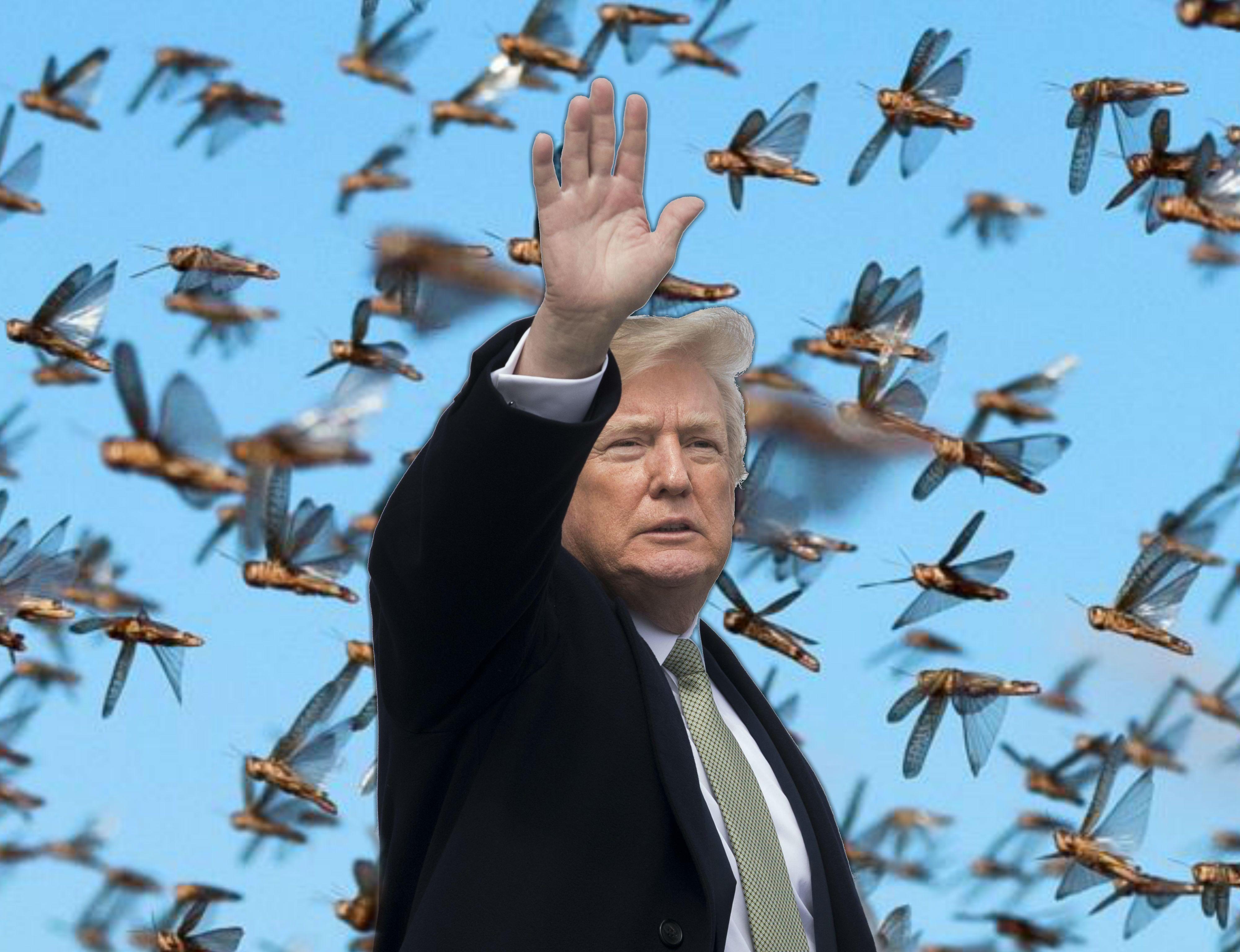 Donald Trump cavallette
