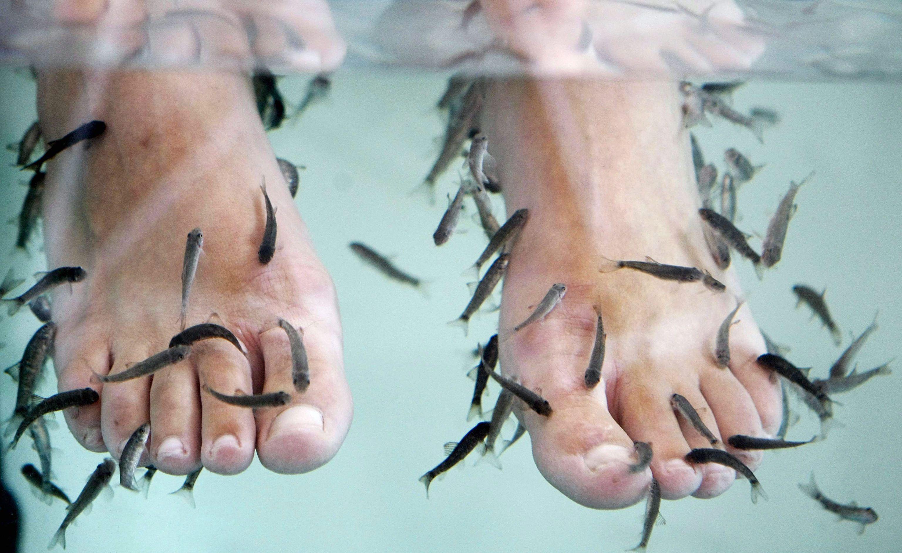 Fish pedicure, l'allarme degli esperti inglesi: 'Può trasmettere epatite o HIV'