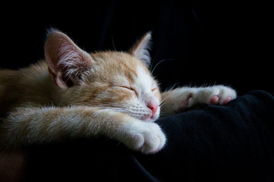 immagini buonanotte gatti