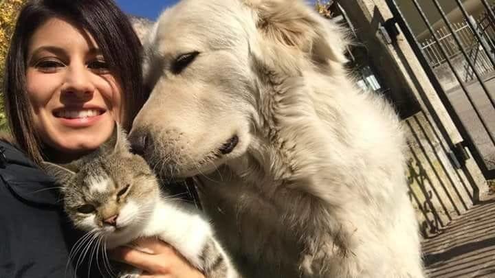 Cane sequestrato perché abbaia troppo, torna a casa: il Tribunale accoglie il ricorso